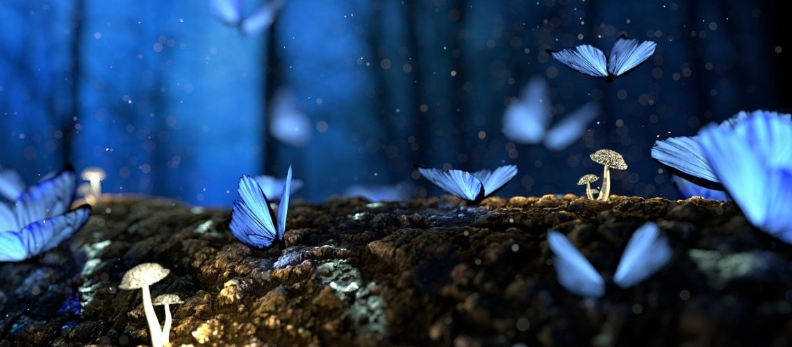 butterfly, blue, forest